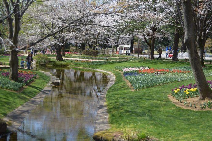 Tháng 4 mùa hoa tulip tại công viên Showakinen